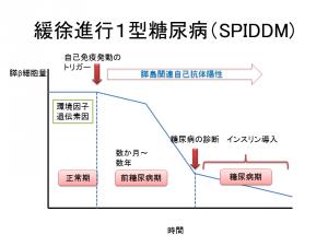 緩徐進行1型糖尿病(SPIDDM)